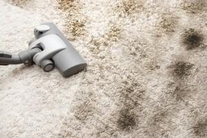 Frank Hanna carpet cleaning east hampton ny